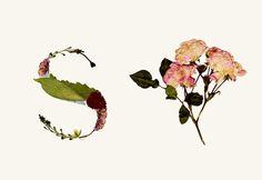 Herbario. Tipografía experimental  © Haizea Nájera