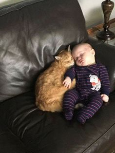 A long-haired cat (with red claw caps) cuddles up with a . - So cute*_* - Baby So Cute Baby, Cute Kids, Cute Babies, Cute Kittens, Cats And Kittens, Cats Bus, Cute Baby Animals, Animals For Kids, Funny Animals