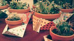 Bandejas de crasas y cactus