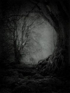 Edited by @darkfrozenocean on Pinterest!   #tree #branch #trees #woods #dark…