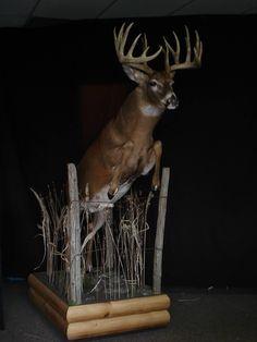 best 25 deer mounts ideas on european mounts Deer Hunting Decor, Deer Decor, Elk Hunting, Taxidermy Decor, Taxidermy Display, Funny Taxidermy, Deer Skulls, Deer Antlers, Deer Shoulder Mount
