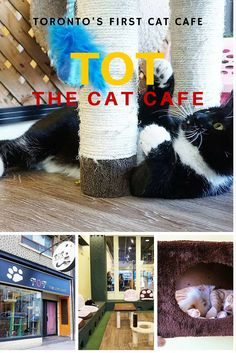 Visiting Toronto's first cat cafe: TOT the Cat Cafe #travel #review #mintnotion