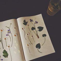 pressed flowers ✿ I N S T A : @rebekah.bieber