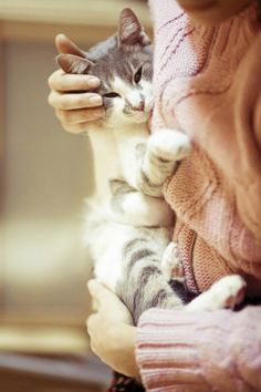Kitty snugs are the best snugs! I Love Cats, Cute Cats, Hugs, Son Chat, Cat Boarding, Crazy Cat Lady, Cats And Kittens, Kitty Cats, Cat Lovers