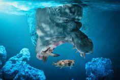 Imaginative Animal Photo Manipulations by John Wilhelm