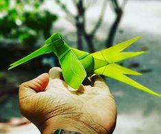 Kudafaree bird Maldives, Palm, Herbs, Leaves, Bird, Plants, The Maldives, Herb, Birds