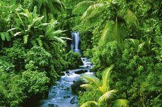 Tropisch Regenwoud poster, klik voor beste weergave