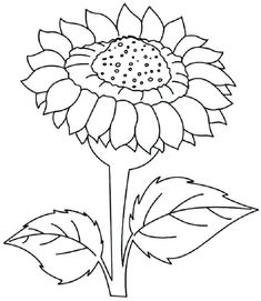 Sunflower Coloring Pages To Print Check More At Coloringareas