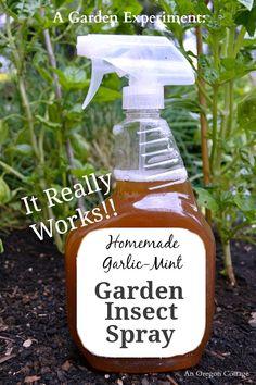 5 Bug in casa Spray Ricette per il vostro giardino