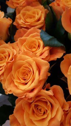 Beautiful Flowers Garden, Amazing Flowers, Beautiful Roses, Pretty Flowers, Butterfly Flowers, Orange Flowers, Beautiful Flowers Wallpapers, Old Rose, Rose Photography