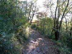 Sentier de Soule (montagne basque)