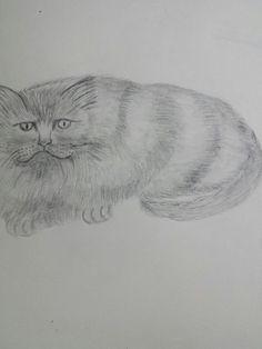Os meus desenhos
