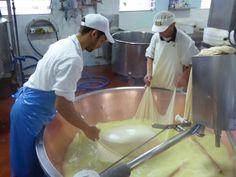 """Geburt Parmesan - """"Parmigiano Reggiano - Echter Parmesan, fast so wertvoll wie gold"""" by @ninotsch"""
