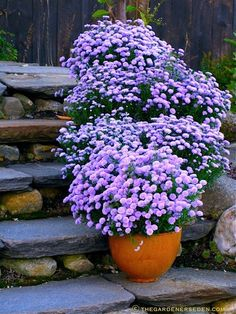 Mums are my favorite for fall... very hardy