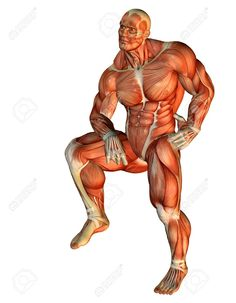 7780916-3D-Rendering-Muscle-Body-Builder-standing-on-one-leg-Stock-Photo.jpg (1011×1300)