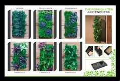 "$35.95. Various uses of a vertical wall panel.  Brightgreen spec. sheets shows the unframed 10 cell planter to be 21.88""H x 10""W x 4.25""D"
