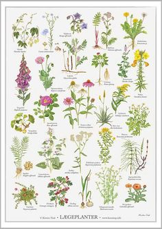 Beautiful Flower Pictures and Name List of Flowers Flower Images With Name, Flowers Names And Pictures, Flower Names, List Of Flowers, Wild Flowers, Wildflower Drawing, Colorado Wildflowers, Foeniculum Vulgare, Planting For Kids