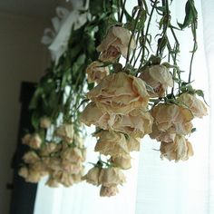 Dried Roses At My Window