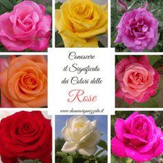 115 Fantastiche Immagini Su Colori Dei Fiori Beautiful Flowers