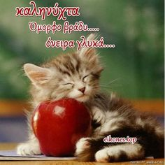 Good Morning Have A Wonderful Sunday good morning sunday sunday quotes happy sunday sunday quote happy sunday quotes Kittens Cutest, Cats And Kittens, Cute Cats, Funny Cats, Funny Animals, Cute Animals, Cats Humor, Good Morning Dear Friend, Morning Cat