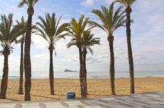 Estas palmeritas alegran la vista a cualquiera, te sentirás como en el paraíso rodeado de sol, arena y mar #HotelCentroMar #CentroMarBenidorm #CentroMar #HotelesBenidorm #Benidorm #Benilovers #Alifornia #CostaBlanca #Playa #Montaña #VistasalMar #Mar #Mediterraneo #Hotelenelcentro #VacacionesenBenidorm #Vacaciones #Holidays