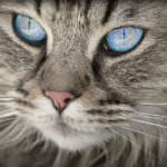 We love our cats to the moon and back, and are always looking for ways to make them happy. But keeping a curious kitty occupied and out of trouble can be a little tricky sometimes! If your cat could use a …