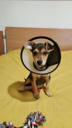 SOS TERREMOTO CUCCIOLA 3 MESI - http://hormiga.it/sos-terremoto-cucciola-3-mesi/ Adoption, Adozioni Cani, Volontari da aiutare
