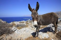 Karpathos Karpathos, Travel Abroad, Top Photo, The Good Place, Greece, Cute Animals, Around The Worlds, Europe, Island
