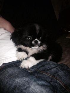 My little puppy dog