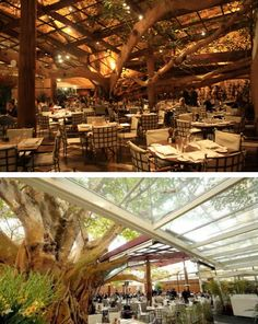 Figueira (Fig Tree) Rubaiyat is a restaurant in São Paulo, built around the spreading limbs of a magnificent old fig tree