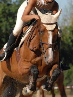High-energy advantages - by Kentucky Performance Products, LLC  #horses