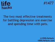 Get a boost of a natural high (chemicals reeased in your brain when you exercise or spend time with your pets) to change your mood