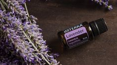 What are the best business opportunities in Spain? Therapeutic Grade Essential Oils, Doterra Essential Oils, Home Based Jobs, Plant Covers, Essential Oil Bottles, Lavandula, Pure Oils, Aromatherapy Oils, Carrier Oils