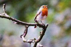 Singing - Singing #Singing #Singer