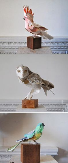 These beautiful paper sculptures are by artist, Anna-Wili Highfield