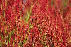 10 Healing Herbs You Can Grow At Home - mindbodygreen.com