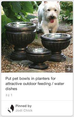 Put dog bowls in planters for a nicer look on the patio. Put dog bowls in planters for a nicer look on the patio. Jardin Decor, Fu Dog, Pet Feeder, Outdoor Living, Outdoor Decor, Outdoor Planters, Patio Plants, Outdoor Spaces, Outdoor Projects