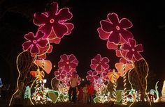 people look at illuminated christmas decorations in cali colombia