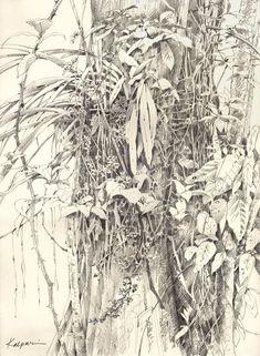 Sketchbook Inspiration, Art Sketchbook, Graphite Drawings, Art Drawings, Ink Pen Art, Charcoal Art, Charcoal Drawing, Tree Sketches, Landscape Sketch
