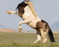 The Challenge Fine Art Wild Horse Photograph by WildHoofbeats