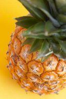 Pineapple takes no longer than 24 hours to Marinate.
