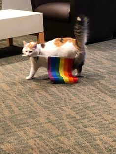 Funny Animals, Cute Animals, Funny Cats, Lgbt Memes, Lgbt Quotes, Gay Aesthetic, Gay Pride, Cute Cats, Lesbian