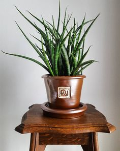 Though to some the appearance of the Sansevieria might not seem as enticing, they make a great ornamental low-maintenance house or office plants. The best thing Snake Plant Images, Trees To Plant, Plant Leaves, Sansevieria Plant, Low Maintenance Garden, Office Plants, Natural Garden, Foliage Plants, Water Plants