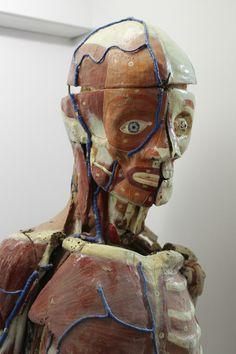 Rarissime Écorché DU DR Auzoux Anatomie Clastique 138cm | eBay