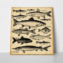 Fish a Coasters, Fish, Sea, Character, Coaster, Pisces, The Ocean, Ocean, Lettering