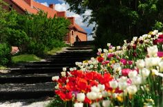 Stairs to heaven Olandia in and amazing tulips Stairs To Heaven, Old Buildings, Poland, Tulips, The Outsiders, Scenery, Amazing, Landscape, Paisajes