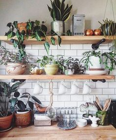 @JustinaBlakeney & Co. Inspiring the world to decorate wild! Join the fun, share your #JungalowStyle Our book: The New Bohemians.   More ideas