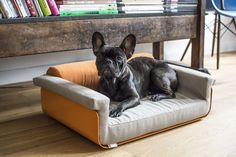 Love this little cutie! Dog bed by chillypets.