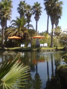 Indian Springs Resort and Spa, Calistoga CA in Napa Valley - Buddha Pond
