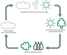 Carbon cycle - Week 4